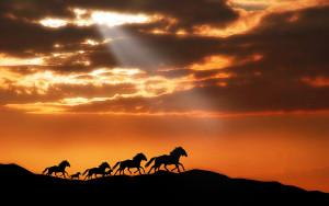 wallpaper_of_animal_several_horses_running_in_the_dusk