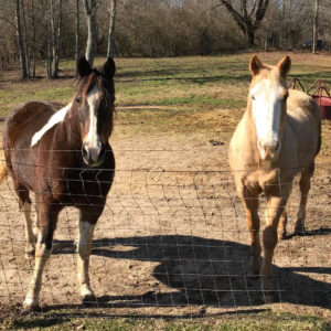 Bearfoot Ranch has two new horses