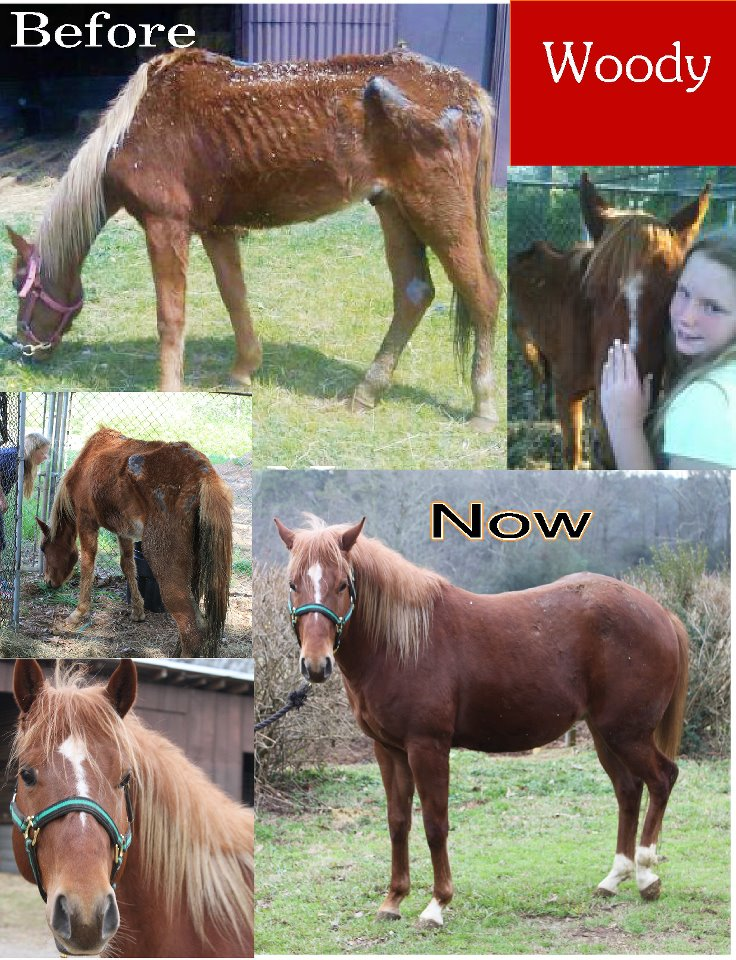 Woody was seized by the Forsyth County Sheriff and rescued by Bearfoot Ranch in Canton, GA