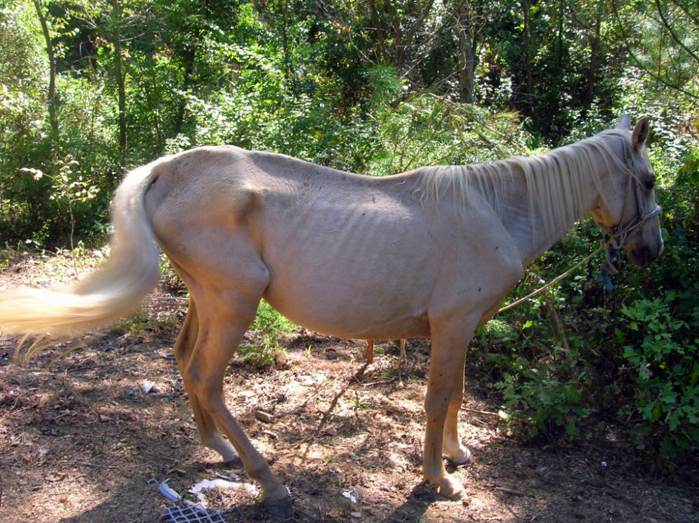 Tibo was a rescue horse at Save The Horses