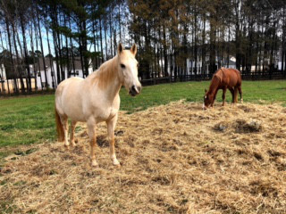 Tibo found his herd at Bearfoot Ranch